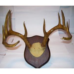 Antlers, Hides & Taxidermy