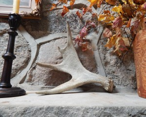 moose antler on mantel