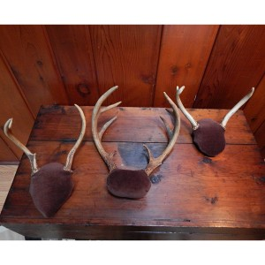 set of 3 antlers 3 cropped