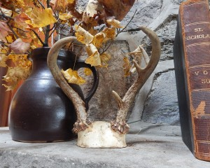 six point standing antler